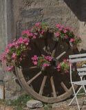 Exhibición de la flor de la rueda de carro Imagen de archivo libre de regalías