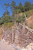 Exhibición de la madera de deriva imagen de archivo libre de regalías
