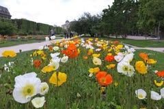 Exhibición de la primavera de las flores en parque Fotos de archivo libres de regalías