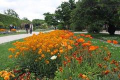 Exhibición de la primavera de las flores en parque Imagenes de archivo
