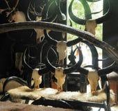 Exhibición de los cráneos y de los cuernos del búfalo Imagenes de archivo