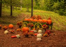 Exhibición decorativa de la granja de la calabaza en otoño fotos de archivo