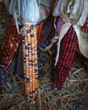 Exhibición del maíz indio Imagen de archivo