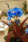 Exhibición floral de Macys Imagen de archivo libre de regalías