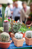 Exhibition of cactuses Stock Images