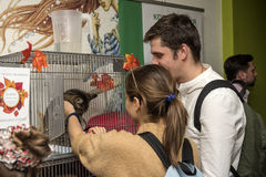 Exhibition and distribution of cats from a shelter Royalty Free Stock Photo