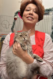 Exhibition and distribution of cats from a shelter Stock Photography