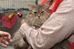 Exhibition and distribution of cats from a shelter Stock Photos