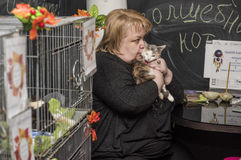 Exhibition and distribution of cats from a shelter Royalty Free Stock Photography