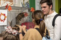 Exhibition and distribution of cats from a shelter Stock Photo
