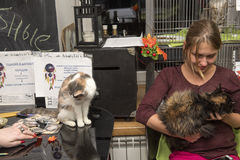 Exhibition and distribution of cats from a shelter Stock Images