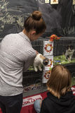 Exhibition and distribution of cats from a shelter Stock Image