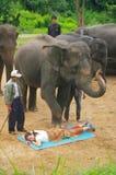 Exhibition Elephant Stock Images