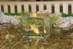 Glass Cube Enabling the Pond Fish to Watch the World around the Pond. Exhibition of gardens and gardening - cube made of glass enabling fish to see our world Royalty Free Stock Photos