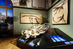Exhibition in Naturhistorisches museum, Vienna Stock Photo