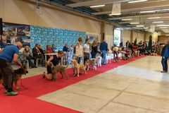 Exhibition of purebred dogs at Palasettembre, Chiuduno BG 14-1 stock photos