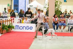Exhibition of purebred dogs at Palasettembre, Chiuduno BG 14-1 royalty free stock image