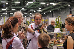 Exhibition of reptiles Stock Photography