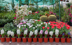 Exhibition selling flowers. Flowers of different varieties on display for sale Stock Photo