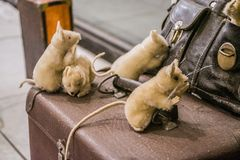 Exhibition of toys. Vienna, Austria. 02.03.2019. Plush toys in the form of several mice on a leather black bag. stock image