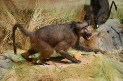Exhibition of wild animal specimens Royalty Free Stock Photography
