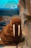 Exhibition of wild animal specimens Royalty Free Stock Image