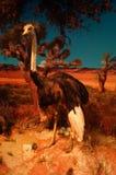 Exhibition of wild animal specimens Royalty Free Stock Photo