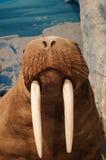Exhibition of wild animal specimens Stock Photography