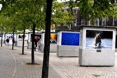 EXHIBTION ΤΗΣ ΑΝΘΙΣΗΣ ΤΟΥ STEVE Στοκ εικόνα με δικαίωμα ελεύθερης χρήσης