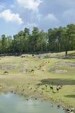 Exibição animal africana no jardim zoológico Safar de KolmÃ¥rden Foto de Stock Royalty Free