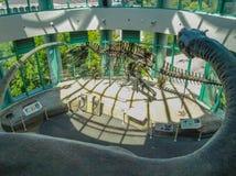 Exibição do dinossauro em Carolina Museum norte de ciências naturais fotos de stock