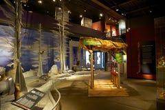 Exibição dos animais selvagens no museu do rio da túnica Fotografia de Stock Royalty Free