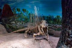 Exibição fóssil no museu real de Tyrrell Imagens de Stock Royalty Free