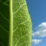 Existence. Conceptual image of a leaf stock image