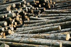 Existencias de la madera foto de archivo libre de regalías