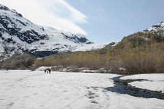 Exit Glacier Stock Photos