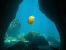 Exit of an underwater cave with a jellyfish. Mediterranean sea, France Royalty Free Stock Photos