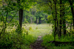 Exiting The Woods to Follow Appalachian Trail White Blaze Stock Images