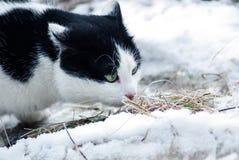 exlporing绿眼的猫 免版税库存照片