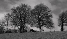 Exmoor Stock Images