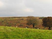 Exmoor Image stock