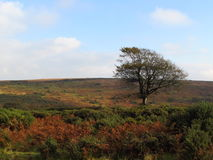 Exmoor en automne Photo stock