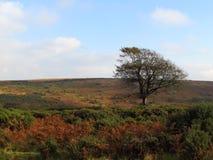 Exmoor en otoño Foto de archivo