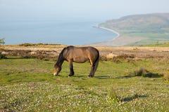 Exmoor-Erbküstenansicht in Richtung zu Porlock-Wehr mit Pony an einem Sommerabend in Somerset Großbritannien Stockbild