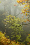 Exmoor Forest Stock Images