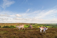 Exmoor Landscape. Stock Photography
