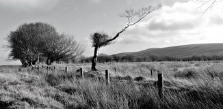 Exmoor morne images stock