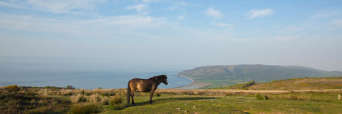 Exmoor nationalpark med ponnyn in mot Porlock Somerset kustpanoramautsikt Royaltyfri Foto