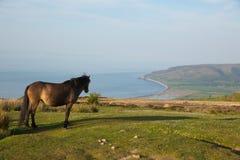 Exmoor nationalparksikt med ponnyn till den Porlock Somerset kusten på en sommarafton Royaltyfri Foto