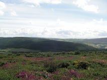 Exmoor Somerset Förenade kungariket ljungsikt royaltyfri bild